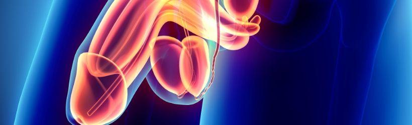Varicocèle : Définitions et symptômes - Santé sur le net