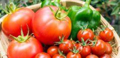 Zoom sur un nouveau virus ennemi des tomates et des poivrons