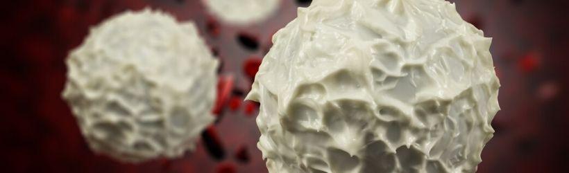 neutropenie-trouble-globule-blanc