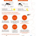 Infographie sur les maladies transmisses par les moustiques