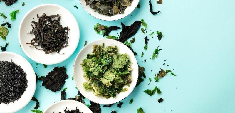 Algues alimentaires : une consommation pas si anodine