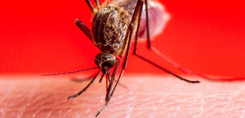 Les moustiques attirés par l'homme et par certaines couleurs