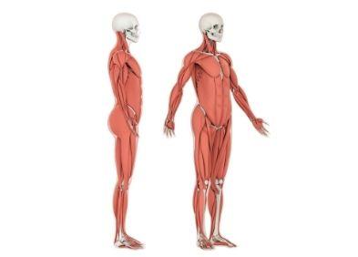 Myopathie des ceintures