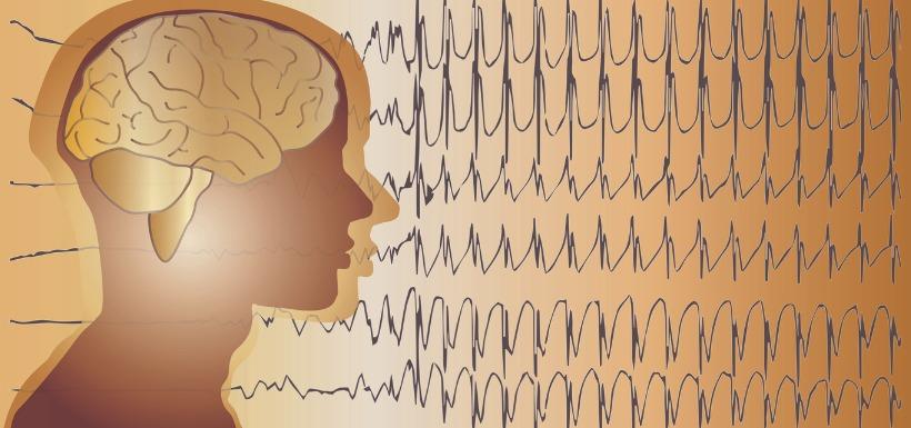 Le rôle de l'horloge interne dans les crises d'épilepsie