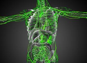corps humain avec les vaisseaux lymphatiques mis en évidence