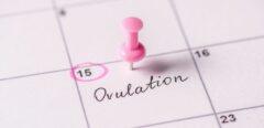 Quel délai pour une grossesse, après l'arrêt de la contraception ?
