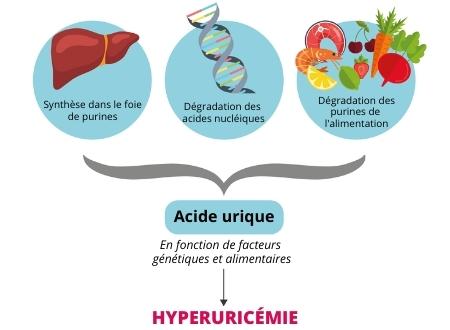 schéma pour décrire une hyperuricemie