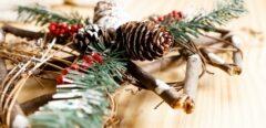 Plantes décoratives de fêtes : Gare à l'ingestion !