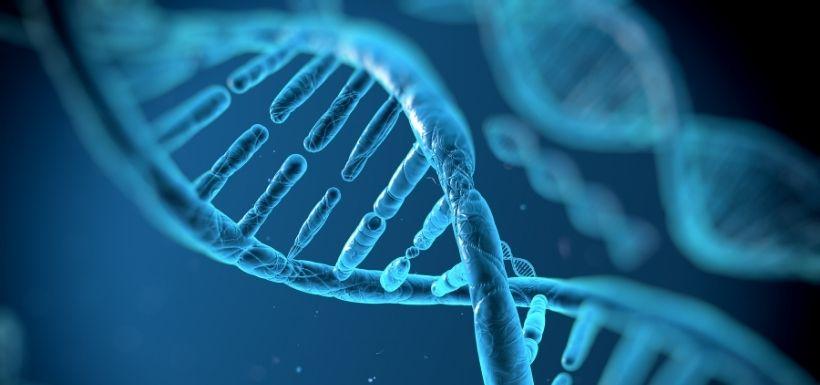 Que se passe t-il après la mort ? Certains gènes cérébraux s'expriment !