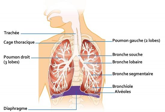 Schema Syndrome de détresse respiratoire aiguë