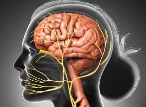 Névralgie faciale sur une image de synthèse
