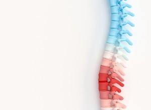 colonne vertébrale de différentes couleurs