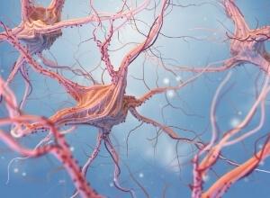 neurones pour représenter le Syndrome de West