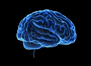 cerveau en 3d