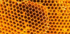 La trypophobie : la peur des trous