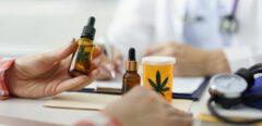 Cannabis médical en France : en cours d'expérimentation !